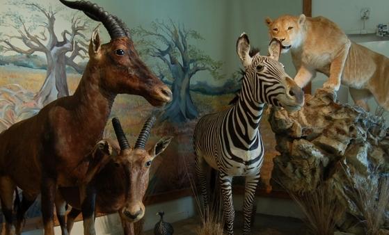 Nos amis les animaux: les logiciels pas bêtes