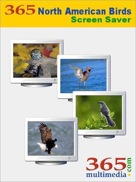 Capture d'écran 365 North American Birds Screen Saver