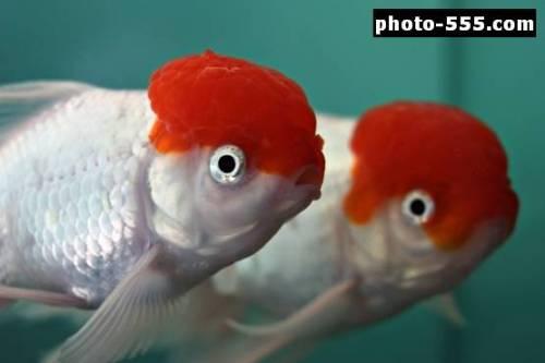 Capture d'écran photo-555.com Rouge : photos gratuites