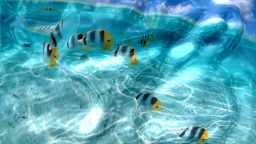 Capture d'écran Watery Desktop 3D Screensaver