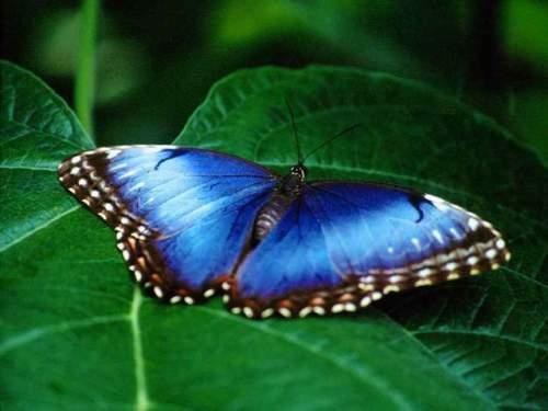 Capture d'écran Free Butterfly Screensaver