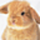 Logo Funny Baby Animals Screensaver