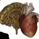 Logo Organes 3D (Anatomie)