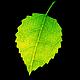Logo Shade