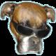 Logo Dog vision