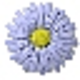 Logo ELIXIR'is Fleurs de Bach