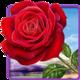 Logo Rose. Magic Touch Fond Anime
