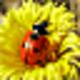 Logo Free Ladybug Screensaver
