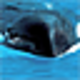 Logo Free Blue Whales Screensaver