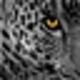 Logo Wild Felines Screensaver