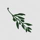 Logo Olive Video Editor