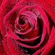 Logo Liebessprüche