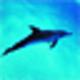 Logo Free Dolphin Screensaver