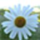 Logo Spring Plants Screensaver
