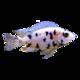 Logo Aquarien Rechner
