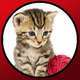 Logo Les bébés aimes les chats