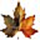 Logo Forêt et torrents