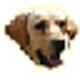 Logo Nicky