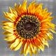 Logo Art de Vincent Van Gogh