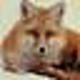 Logo Freeware XMLFox XML Editor