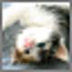Logo Cute Kitties Screensaver