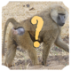 Logo Animal Quiz