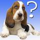 Logo Devinez la race de chien