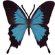 Logo CapturEZ Pro