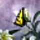 Logo Butterflies World Screensaver