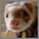Logo Wacky Animals Screensaver
