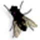 Logo Fly on Desktop Screensaver