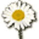 Logo 3D Camomile Field Screensaver