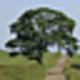 Logo free trees screensaver