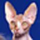 Logo Funny Animals Screensaver