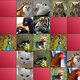 Logo Memory Game – Animals