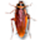 Logo Cockroach on Desktop