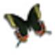 Logo Desktop Butterflies 3D Screensaver