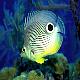 Logo Marine Aquarium