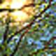 Logo Springtime 3D Screensaver