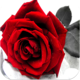 Logo Love Romantic Images
