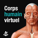 Logo Corps humain virtuel