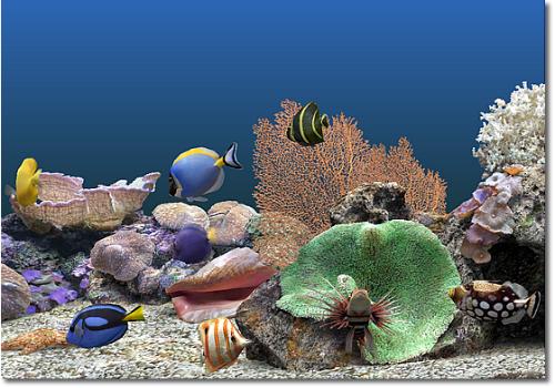 Capture d'écran Marine Aquarium
