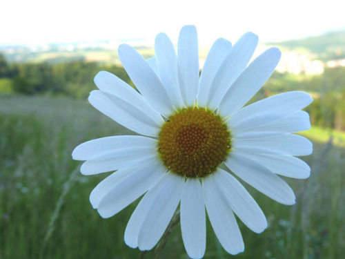 Capture d'écran Spring Plants Screensaver