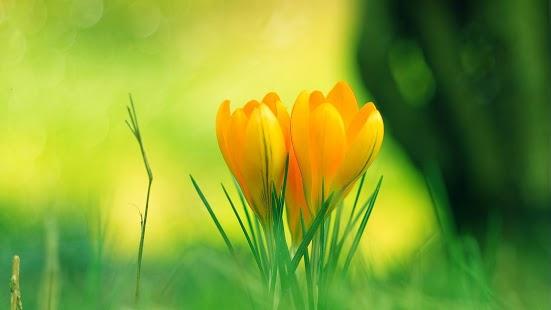 Capture d'écran Flower Clock Free Wallpaper