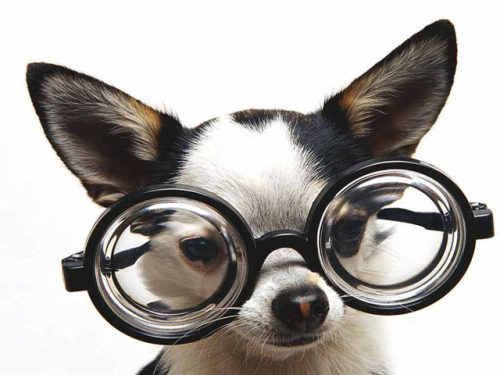Capture d'écran Humorous Pets Screensaver