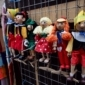 pantins marionettes